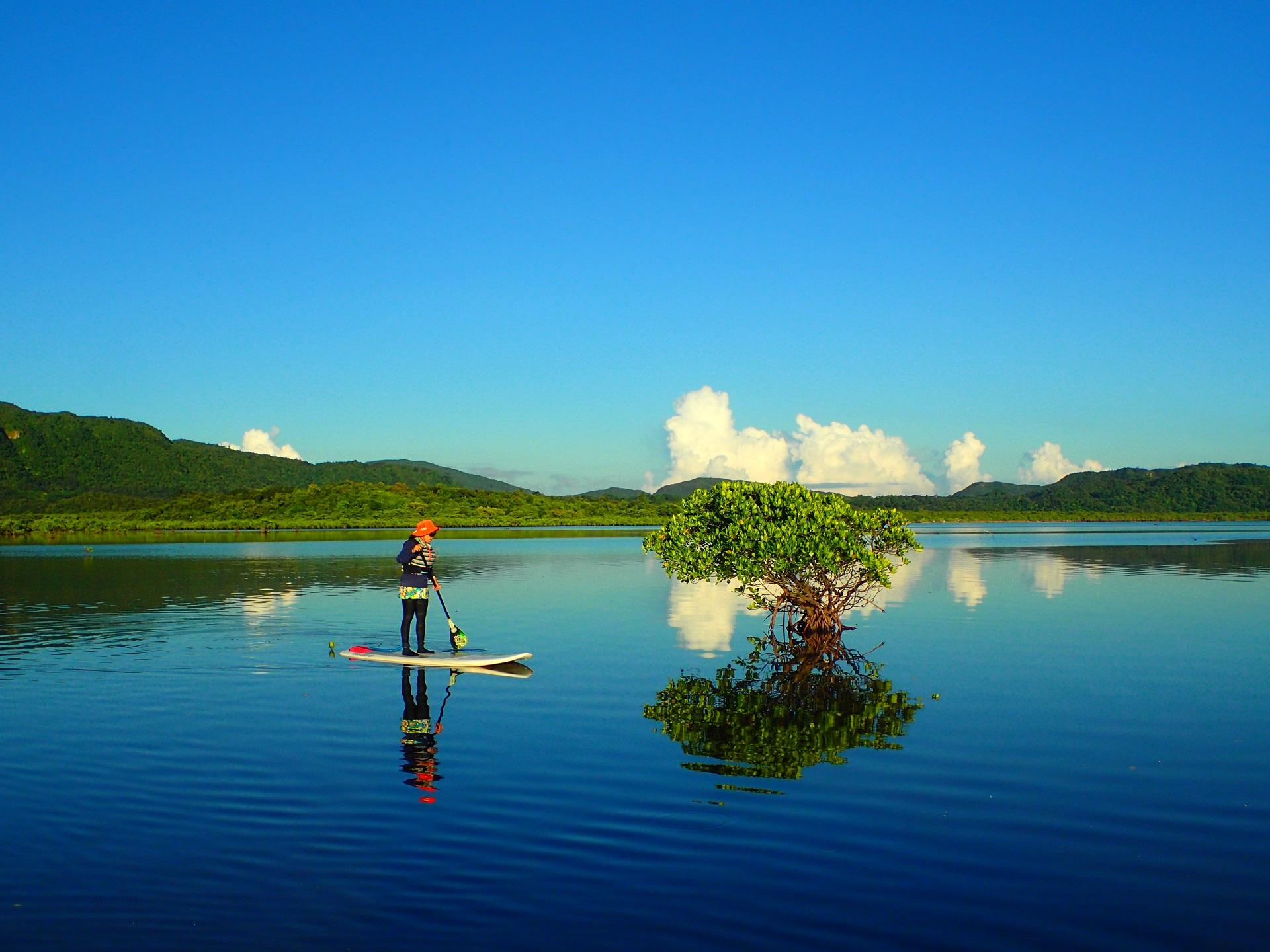 西表島マングローブSUP